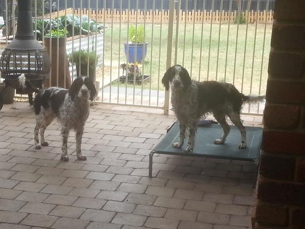 House sitting with 2 dogs 3-27 August 2017