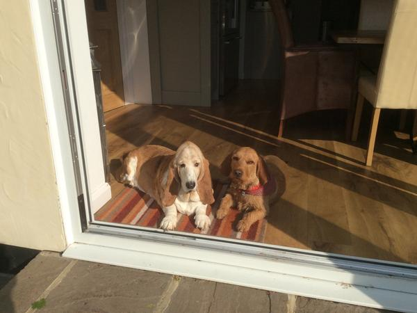 Housesitting assignment in Leatherhead, United Kingdom