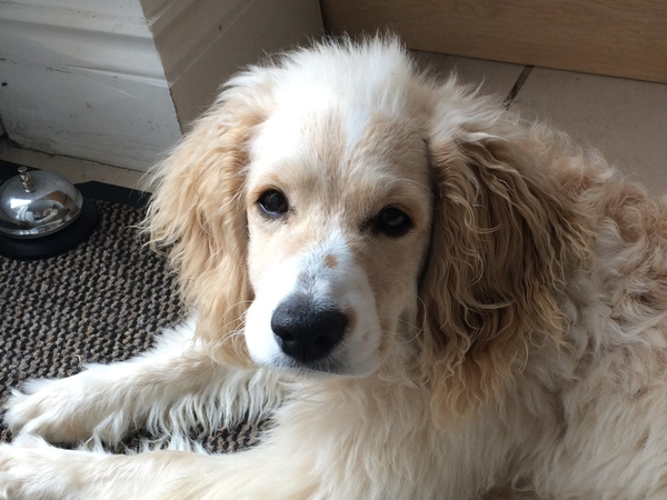 Our Cockapoo, 2 cats & a fish need sitting in Oxfordshire