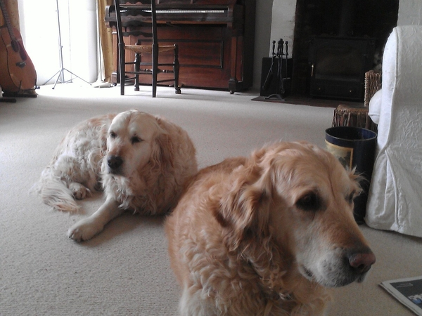 Housesitting assignment in Stockbridge, United Kingdom
