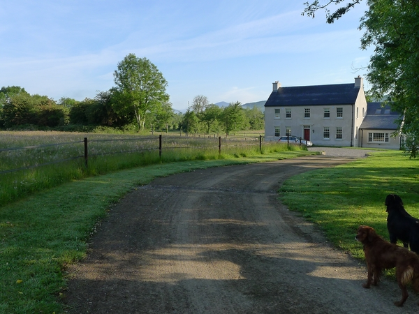 Pet sitter required for 3 dogs, 2 horses and a cat on beautiful farm