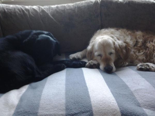 House & dog sitting