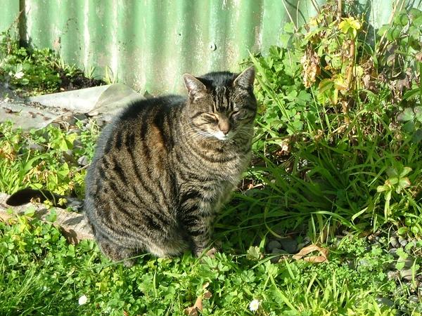 Cat sitter wanted Wanganui