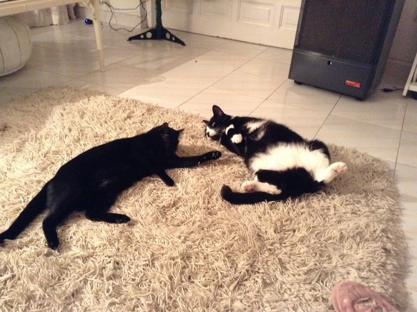Cat sitter for 2 timid cats