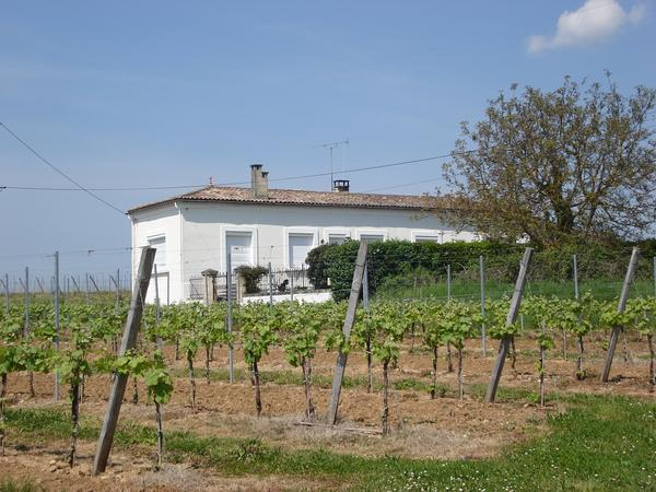 Housesitting assignment in Castillon-la-Bataille, France