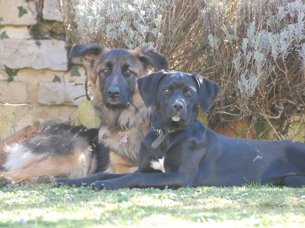 Sitter required for 2 dogs & 3 cats in Holland