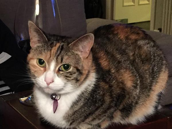 Housesitting / Cat Sitting for Adorable, Affectionate Kitty