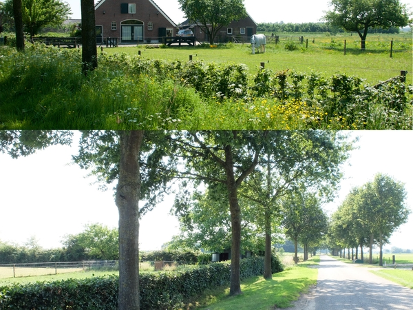 Housesitting assignment in Doesburg, Netherlands