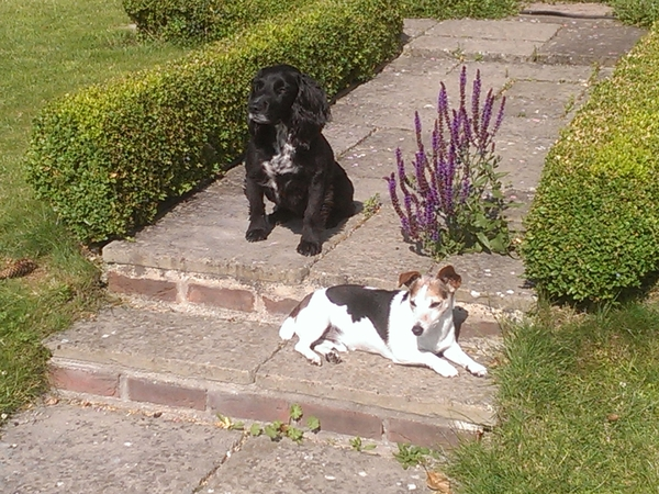 Wanted - someone to look after us Dogs while Mum and Dad get some sunshine