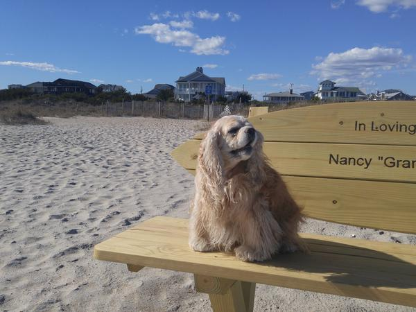 Housesitting assignment in Wrightsville Beach, North Carolina, United States