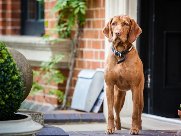 Pet sitters required for family home, Edgbaston, for 2 dogs & 2 cats