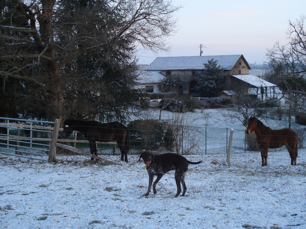 House and pet sitter required in France for 5 weeks from late Jan to early March 2015