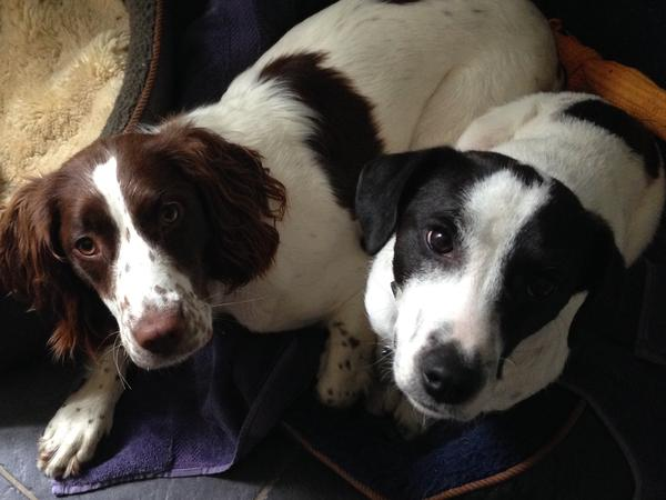 Dog/house sitter needed for two dogs in central Brighton