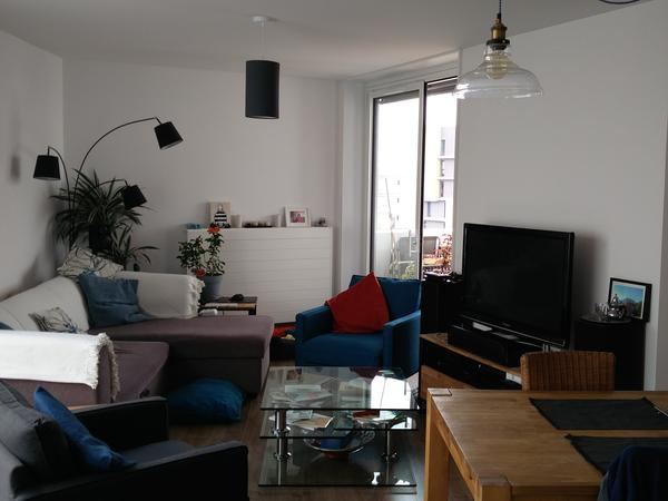 Playful, affectionate 10-month-old Brittany spaniel in a spacious 3-bedroom flat in Toulouse
