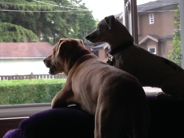 Brandi & Mike from Vancouver, BC, Canada