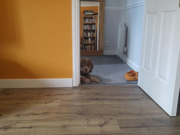 Housesitting assignment in Canterbury, United Kingdom