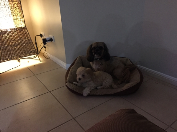 House and pet sitting required for Gold Coast Family In January 2016.