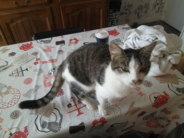 Housesitting assignment in Ceaucé, France