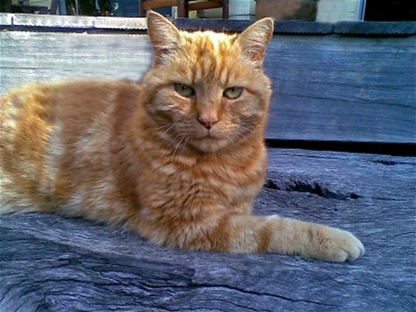 Pet/house sitters for our house & 19 year old cat for 1 month