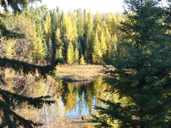 Housesitting assignment in Drayton Valley, Alberta, Canada