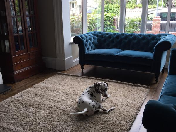 Dog/cat/house sitter required for super-friendly dalmatian, laid-back cat, and large family home in central Colchester, UK