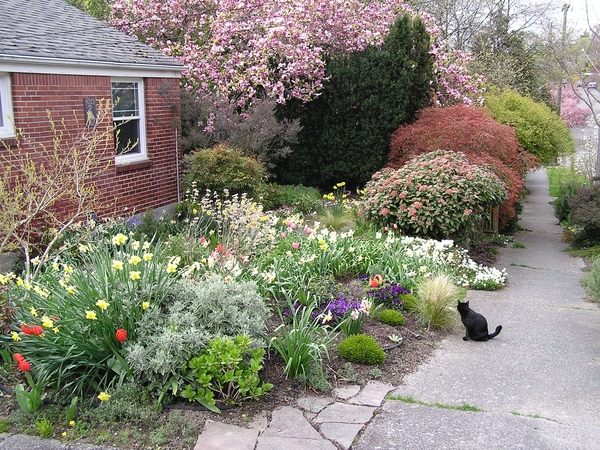 Housesitting with sweet & adorable kitties: great location, lovely sunsets & a garden
