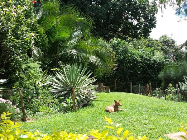 Housesitting assignment in Nairobi, Kenya