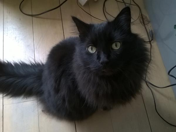 Cat/House sitter needed in March/April in London SW10