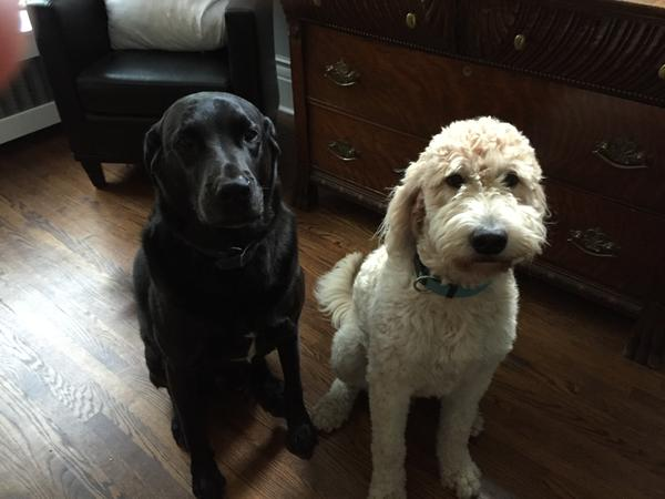 Dog sitter at our home in downtown Toronto