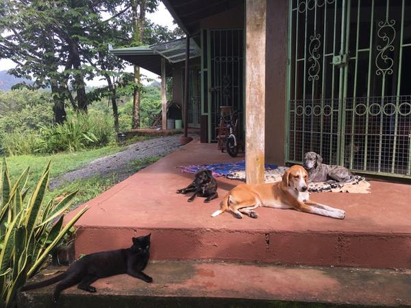 Housesitting assignment in Dominical, Costa Rica