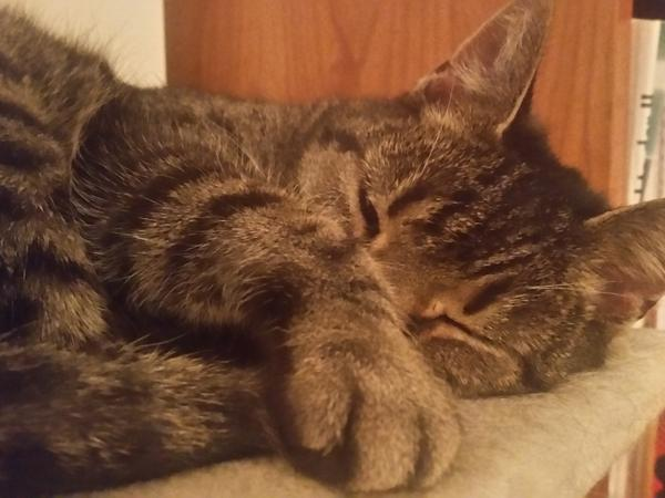 House and Pet Sitter required for 3 friendly cats in Melbourne for 1 week in November and 4 to 5 weeks over Xmas / New Year 2017/18 (dates a bit flexible,  min 25 Dec to 27 Jan).