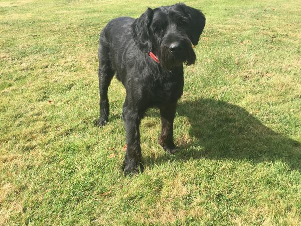 House/pet sitter for a beautiful Victorian property and one elderly very affectionate dog