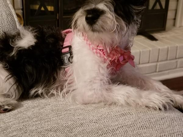 Housesitting assignment in Fleming Island, Florida, United States