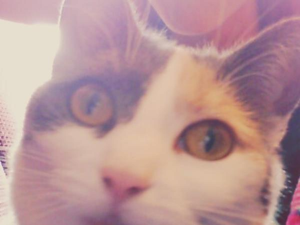 Cat and house sitter needed Leiden, The Netherlands SHORT NOTICE