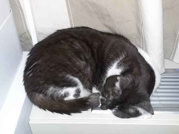 Pet sitter needed for 2 cats in Manhattan