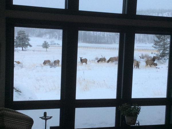 Housesitting assignment in Bellvue, Colorado, United States
