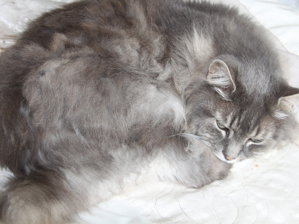 Reliable caring person / couple needed to look after two beautiful cats in September.