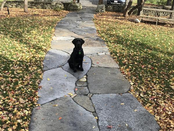 Housesitting assignment in South Amherst, Massachusetts, United States
