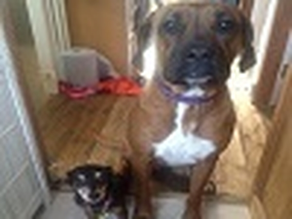 3 bed Semi and two dogs need some housesitting New Addington, East Croydon Area