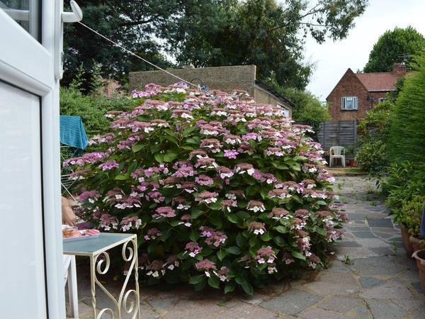 Housesitting assignment in Isleworth, United Kingdom