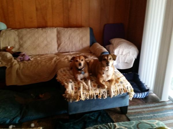 Housesitting assignment in Tomah, WI, United States