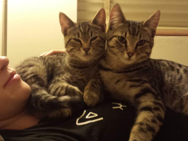 Two wonderful tabby boys looking for a buddy over Christmas holiday