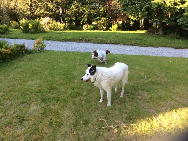 Housesitting assignment in Donegal, Ireland