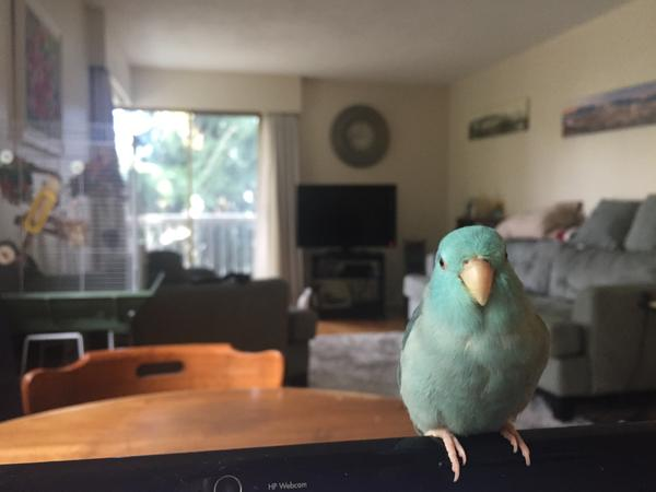 Little Bird Needs Some Company!