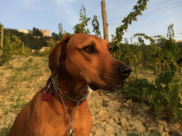 Organic Vineyard with an Amazing View (and Adorable Pets)
