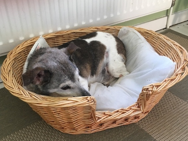 OAP Charlie urgently needs a housesitter for cuddles