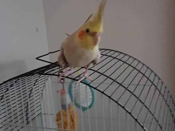 House and pet sit during our holiday, taking the dogs for morning and evening walk (down to beach or nearby park), and daily feed. Ensure my bird has food and water.