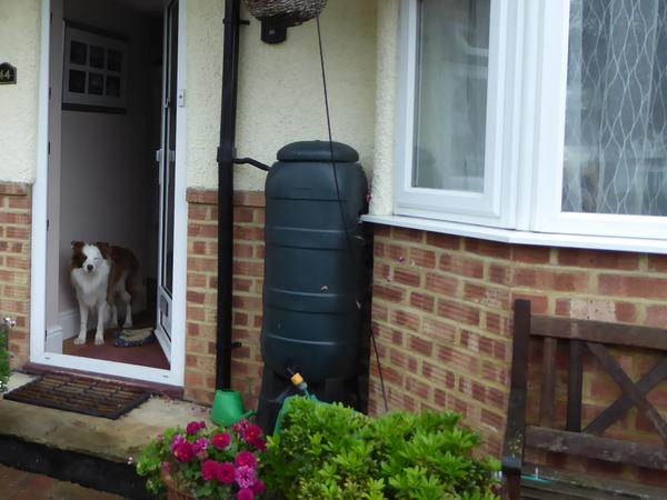 Border Collie with nice detached house close to all amenities and just 30 minutes from London in New Haw, Surrey KT153HR.