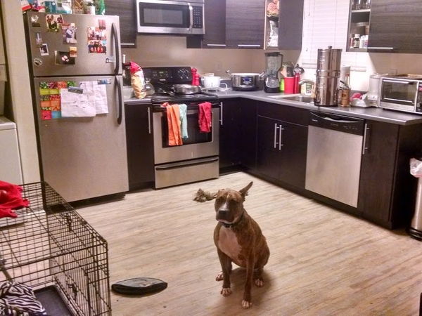 Housesitting assignment in San Diego, CA, United States