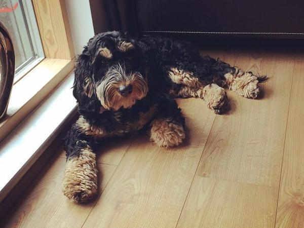 Long weekend sit required for 2 adorable dogs and 1 cat in Putney